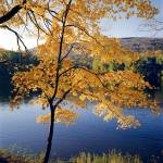 """""""Autumn Maple Tree"""" by Degginger"""
