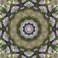 Mauve and White Lantana Kaleidoscope Art 1