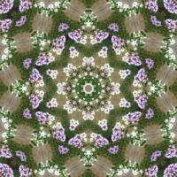 Mauve and White Lantana Kaleidoscope Art 4