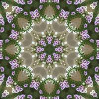 Mauve and White Lantana Kaleidoscope Art 5