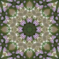 Mauve and White Lantana Kaleidoscope Art 6