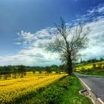 """""""The Yellow Brick Road"""" by irishphotographer"""