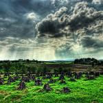 """""""Stacking the Turf"""" by irishphotographer"""