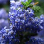 """""""Blueberry Sky"""" by minabast"""