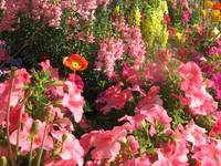 God's Flowerbed