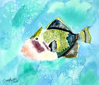 trigger fish aquatic art print