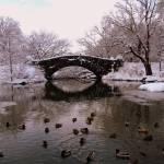 """Central Park"" by CraigWilson"