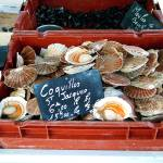 """Coquilles"" by Deano"