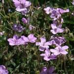 """""""Wild Flowers"""" by Terriair"""