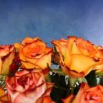 """roses"" by designrabrooks"