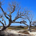 """three dead trees"" by VivianGerogianni"