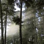 """""""rays and fog in the forest"""" by VivianGerogianni"""