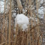 """Snowy"" by reddrakesfire"
