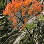 """orange tree"" by VivianGerogianni"