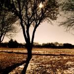 """Sunshine on Fresh Snow"" by javanslyke"