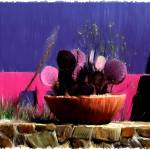 """Cactus Pot on Stone Wall"" by Edith"