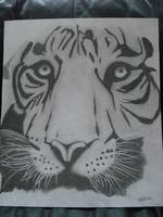 tiger pencil drawing