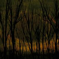 fire forest Art Prints & Posters by E. M. Black