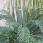 """Bamboo/w Cactus"" by VenusKat"
