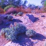 """""""Sunlit Desert Scene"""" by VenusKat"""