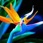 """""""Bird of Paradise"""" by jbmamay"""