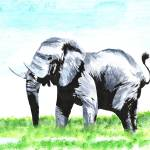 """Acrylic painting of elephant in africa"" by conashlib"