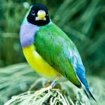 """Green and Yellow Parrot"" by Digitaldreamsphotography"