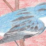 """Cerulean Warbler"" by HarmonicNature"