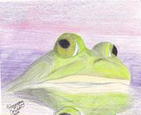 A Bull Frog at Sunrise