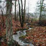 """Fallen Leaves At Fern Creek"" by Lorraine_Sommer"
