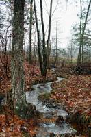 Fallen Leaves At Fern Creek