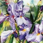 """Purple Irises In My Garden"" by allinghamcarlson"