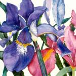 """Reticulated Irises"" by allinghamcarlson"
