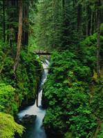 Log footbridge crossing over Sol Duc Falls & River