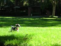 Bailey's Puppy Romp