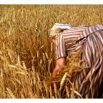 """""""In the fields of wheat"""" by mashone"""