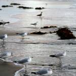 """Shore birds"" by terri"