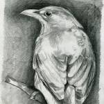 """Blackbird."" by Nawroski"