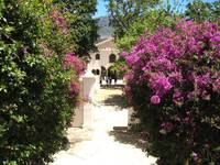 Bougainvillea walk