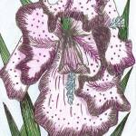"""Colored Iris Drawing"" by julia_art"