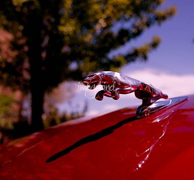 """2010 Jaguar For Sale: Stunning """"Black Jaguar"""" Artwork For Sale On Fine Art Prints"""