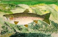 Rainbow Trout half size
