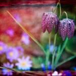 """Garden Fantasy"" by ChrisLord"
