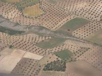 Olive Trees Near Madrid