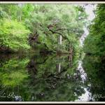 """Reflection off the Steinhatchee"" by BABowenphotography"