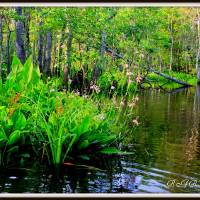 """Side creek of the Waccasassa River"" by Barbara Bowen"