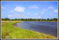 Tidal flats along Lower Suwanee Wildlife Refuge