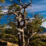 """Gnarled Tree"" by timleonhardt"
