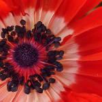 """anemone"" by teresapople"