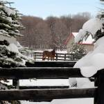 """JGS_IdyllicCountryWinter"" by PhotographyofGrace"